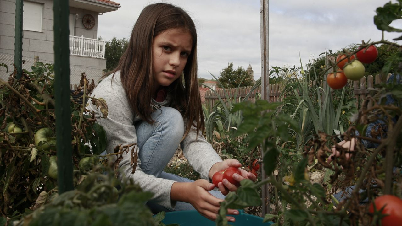 La reconversión de una escombrera en huerto les valió el curso pasado el premio provincial de Voz Natura, y ahora, además, sirve de despensa para el comedor. Una de las alumnas de sexto, arriba, coge tomates y cebollas para el guiso del día