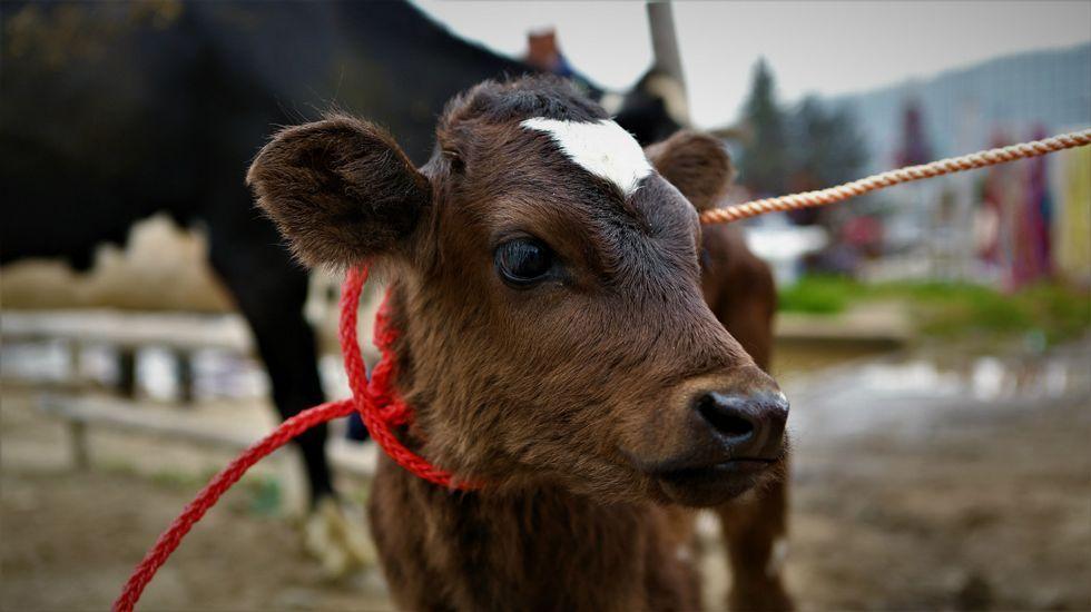 Mercado de animales en Otavalo