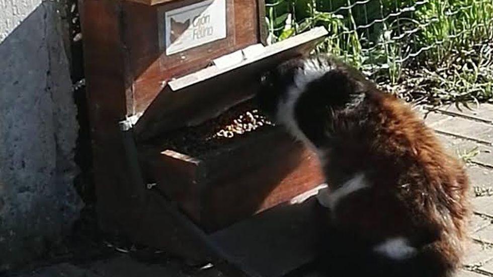 Gato comiendo en Gijón.Gato comiendo en Gijón