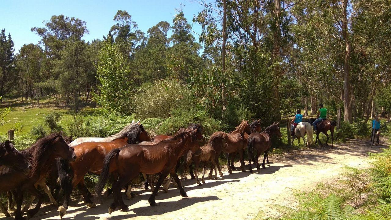 Los caballos de la Baixa das Bestas de Amil.