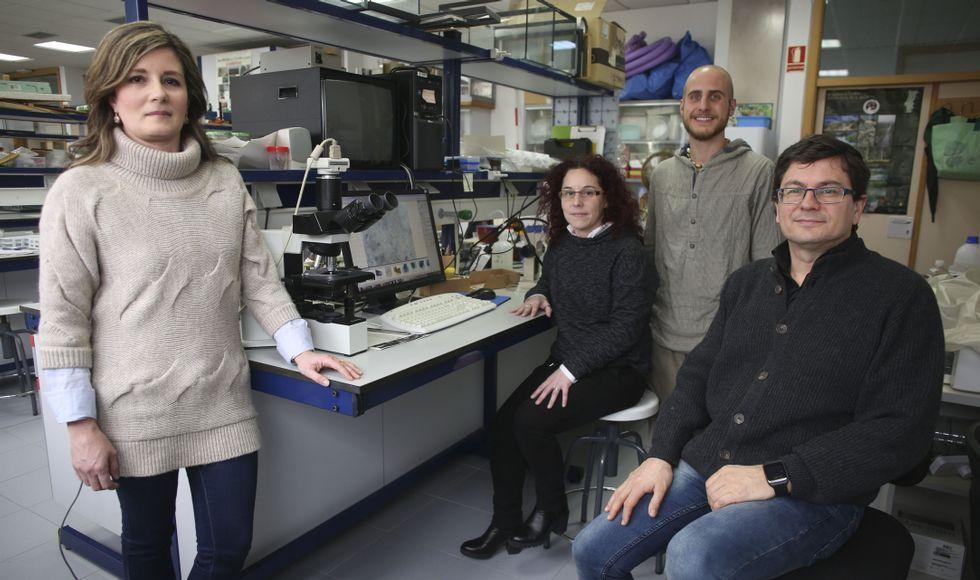 Serena Santolamazza, Rosana Sánchez-Guillén, Iago Sanmartín y Adolfo Cordero, en el laboratorio del grupo de Ecología Evolutiva.