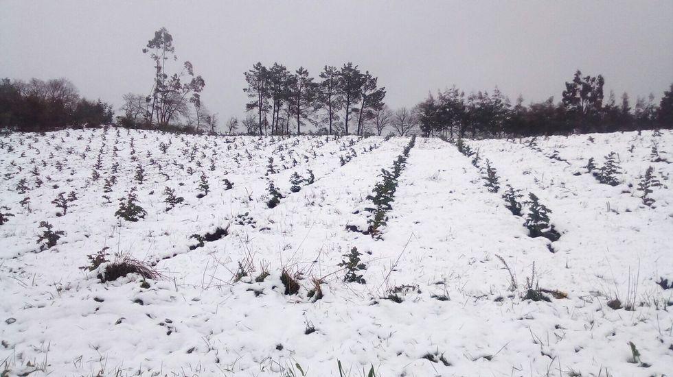 Nieve en la comarca