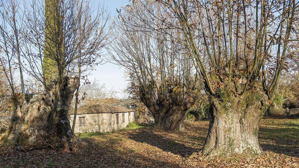Lobios posee un bosque de castaños de gran antigüedad