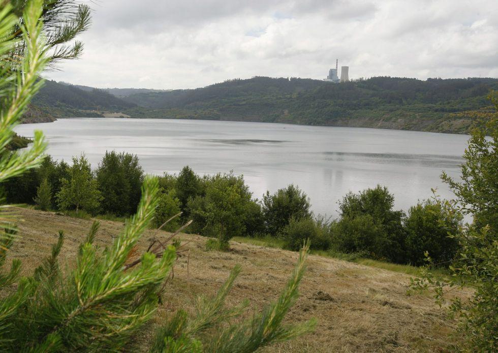 Capturando vencejos en Lugo.No es solo el lago (2,2 kilómetros): la rehabilitación medioambiental afecta a todo el entorno. En total, mil hectáreas, con 450.000 árboles, según la empresa.
