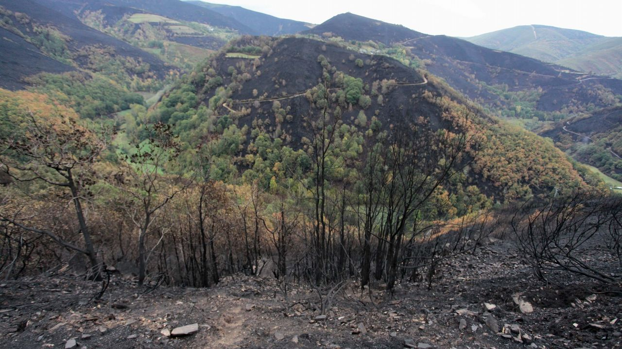 El monte de Cereixedo hace un año, arrasado por el incendio