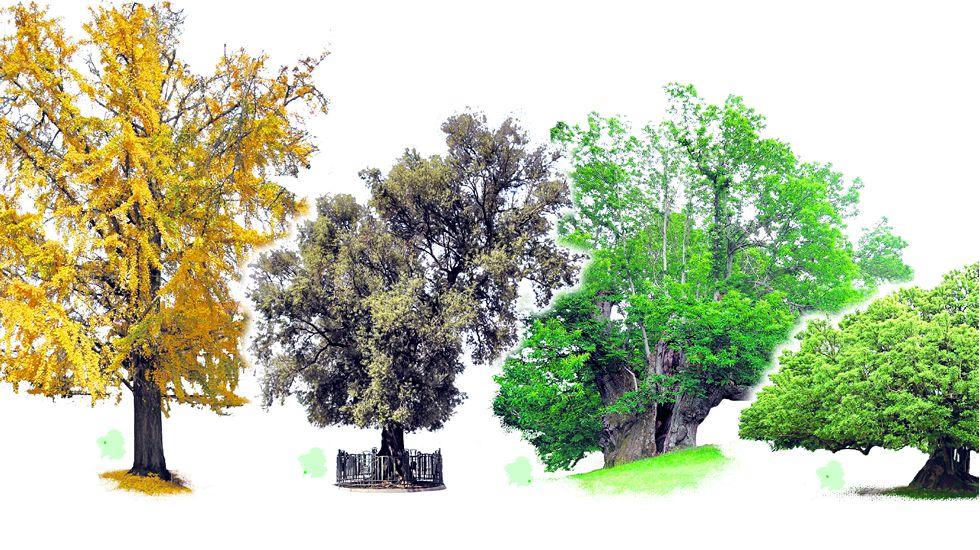 Árboles Alexia foto h