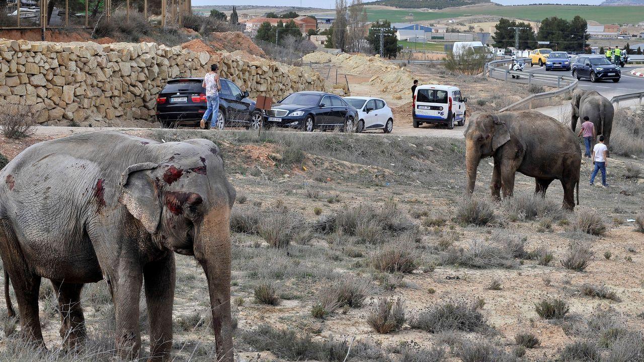 ¿Qué pasará con los elefantes accidentados en Albacete?.Jugadores y cuerpo técnico en rueda de prensa