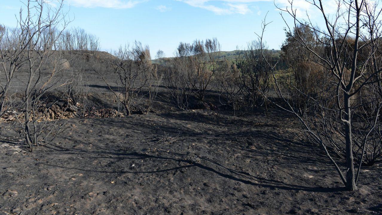Rebrota el incendio que quemó más de 150 hectáreas en O Courel