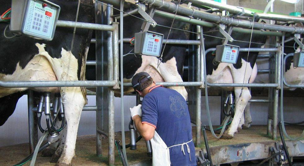 .Las explotaciones en control lechero de Africor Pontevedra bajaron el pasado año en veinte.