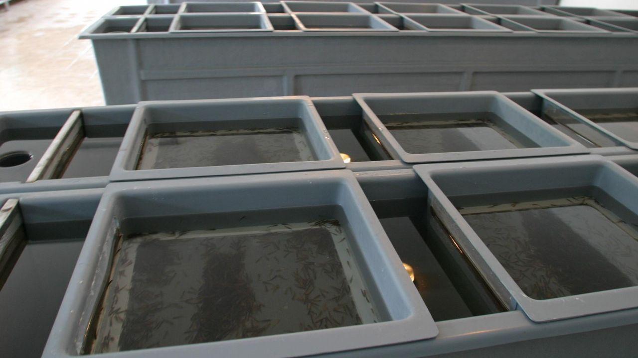 .Instalaciones de una piscifactoría gallega