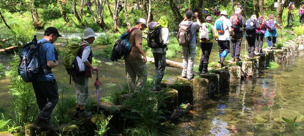 Covelo, fábrica de centenarios.Senderistas cruzan el río Tea por el paso pétreo de Lourido en Covelo. El de Tatín, en Mondariz, era impracticable porque el río va crecido.