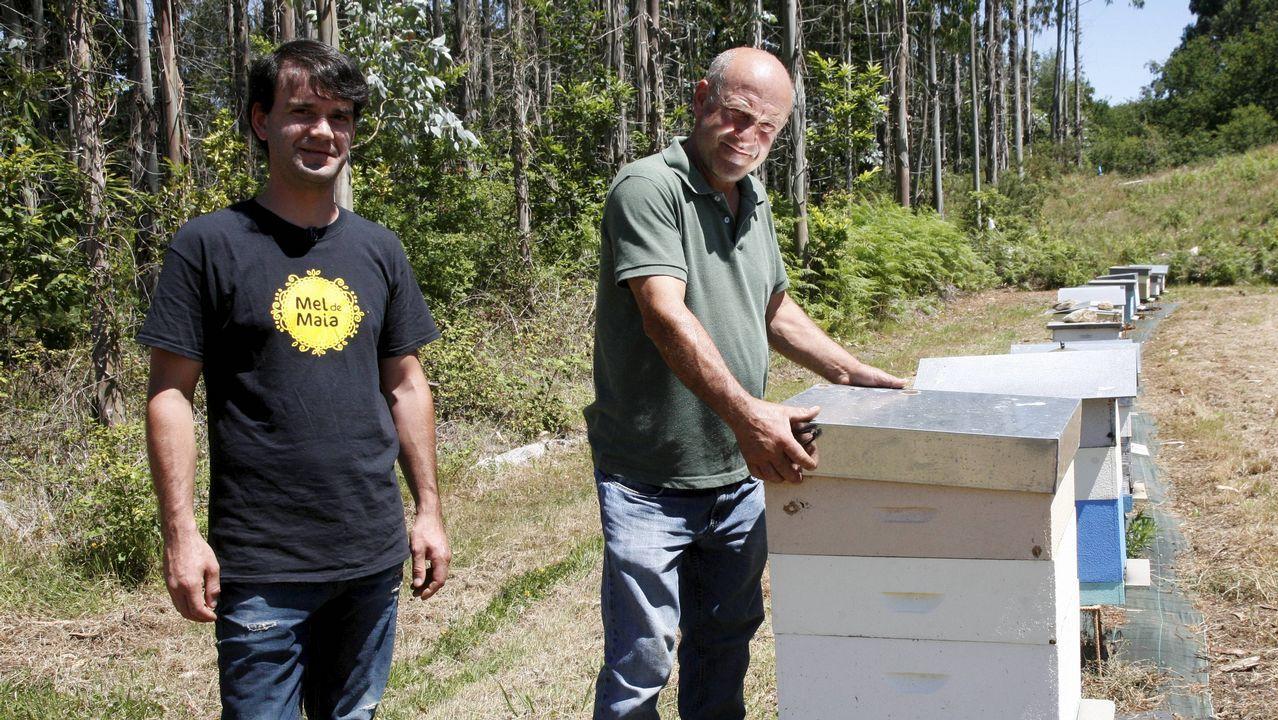 Así se retira un ejambre de abejas
