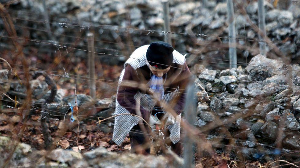 Excavaciones en Cereixa. En el castro de San Lourenzo, en en el municipio A Pobra do Brollón, se llevaron a cabo este año nuevas investigaciones sobre el terreno que han seguido sacando a la luz importantes vestigios arqueológicos de las épocas castreña y medieval