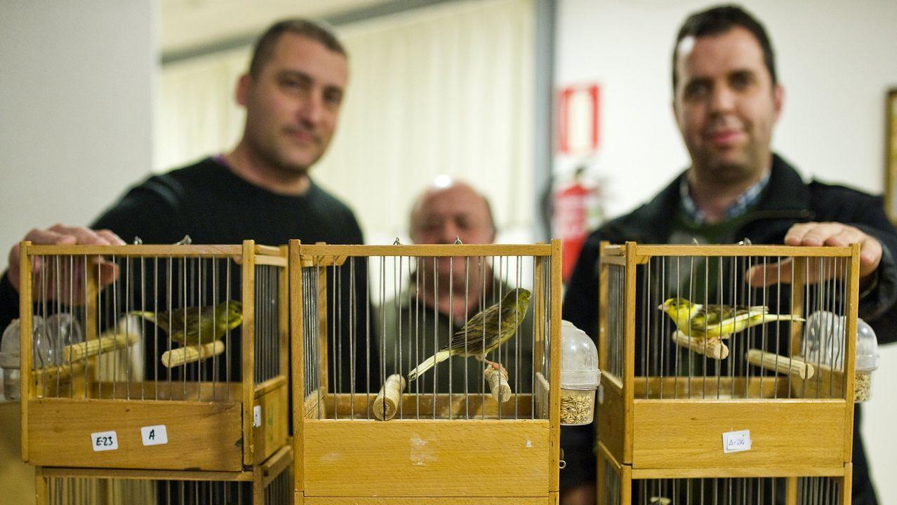 Observación de aves en el complejo intermareal de O Bao.Las poblaciones de lechuza común disminuyeron cerca de un 15% en los últimos 10 años