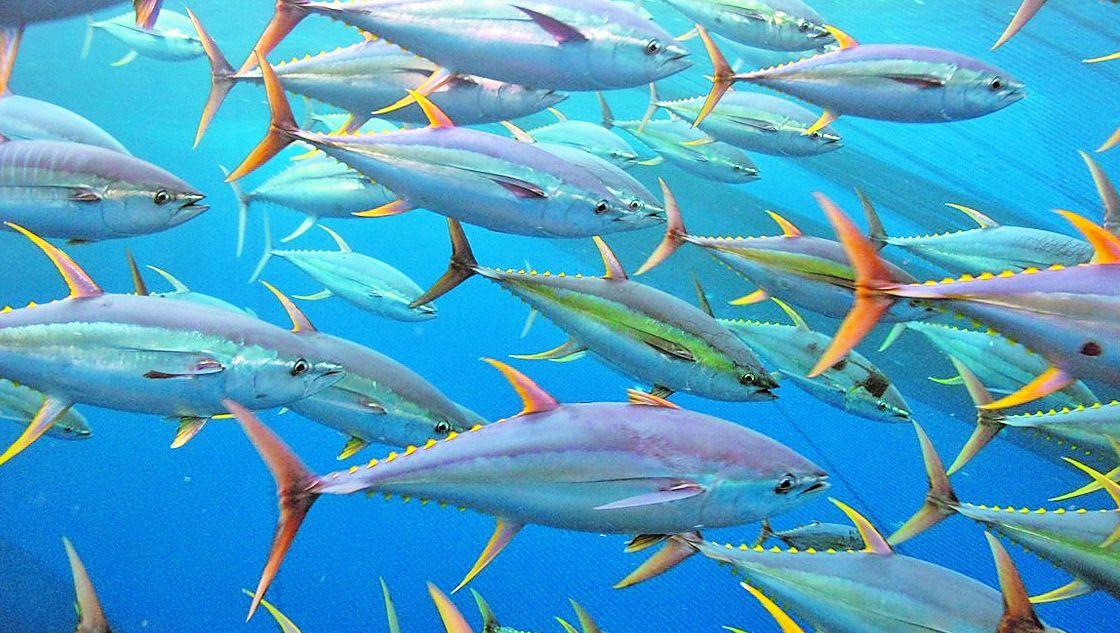 Diez toneladas de almeja intervenida y más de veinte empresas investigadas por la comercialización ilegal de marisco portugués