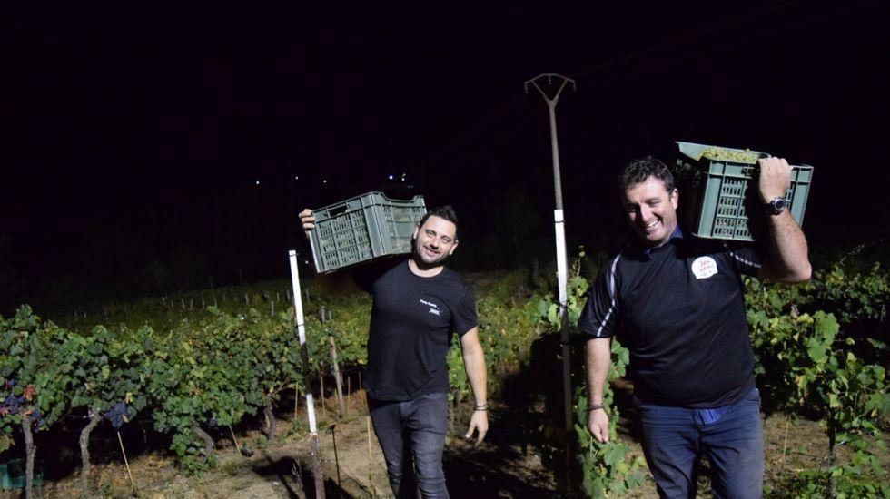 Primera vendimia nocturna en Ribeira Sacra.Diego y Cristina, en el corredor de Monforte, donde sufrieron un grave accidente en el año 2010