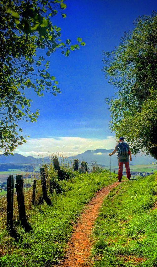 Un peregrino se detiene a contemplar el paisaje en un trecho del Camino