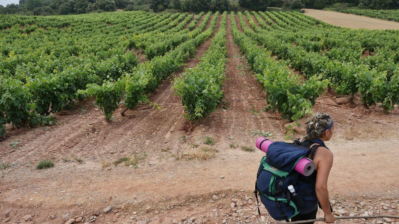 La ruta entre viñedos, a las afueras de Logroño