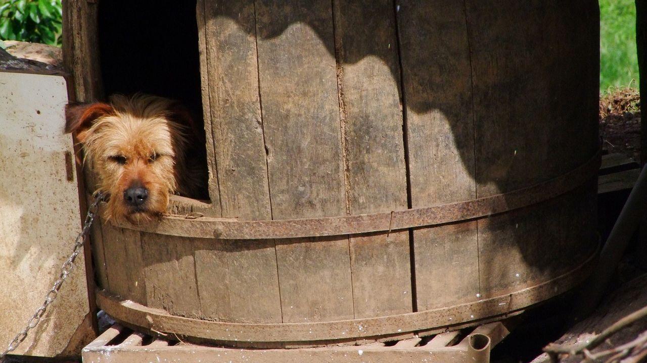 Un tonel reutilizado como caseta de perro en Freixeiro, en el municipio de Quiroga