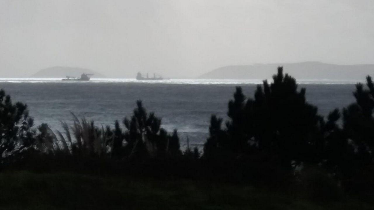 Así descubrieron en Vigo a la Phronima sedentaria, una extraña criatura del abismo marino.El puente de Toralla