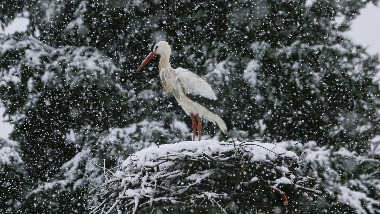 .Cigüeña bajo la nieve