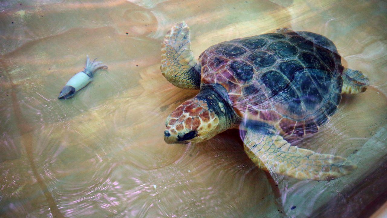 Cemma libera una tortuga en Teis