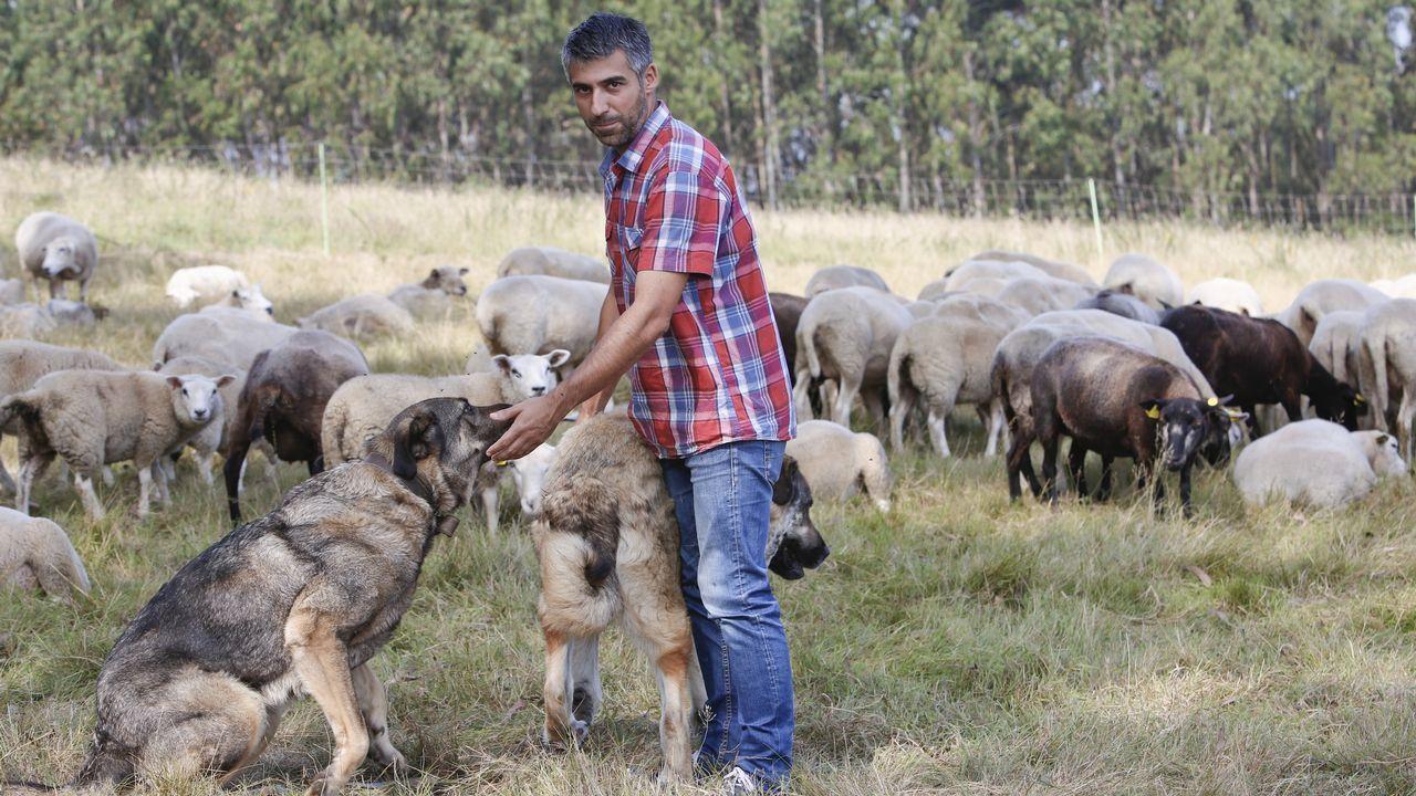 De Barcelona a Meira para criar ovejas.
