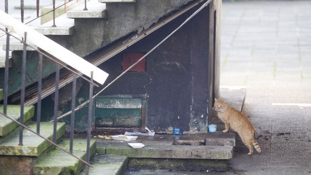 Bajo las escaleras de la plaza de Armas habita una colonia de gatos callejeros
