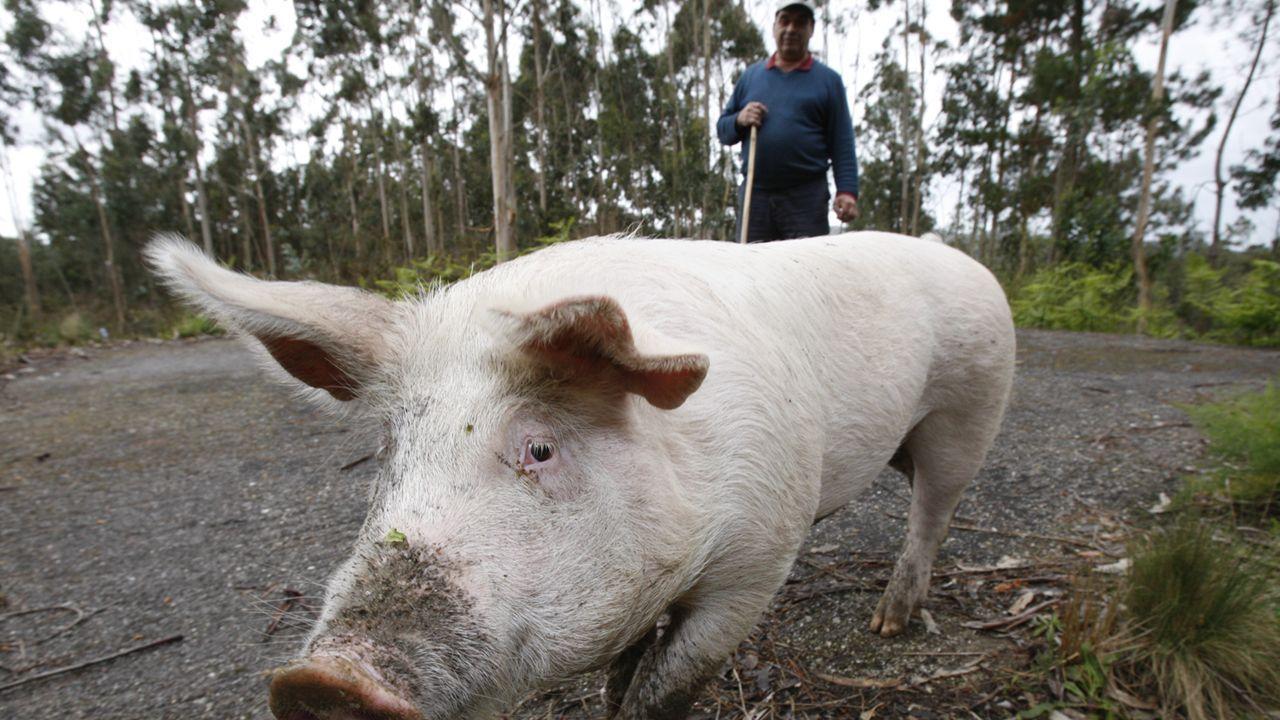 Primeras imágenes de Quinín del 2008 cuando saltó a la fama por sus cualidades «caninas».