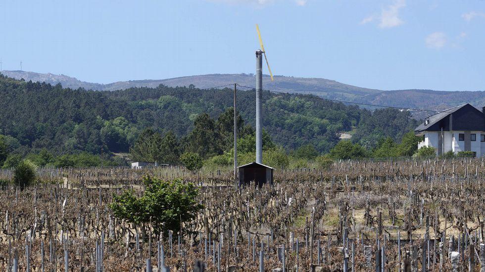 ¿Habría salvado la cosecha este ventilador gigante?.CEIP San Salvador de Teis