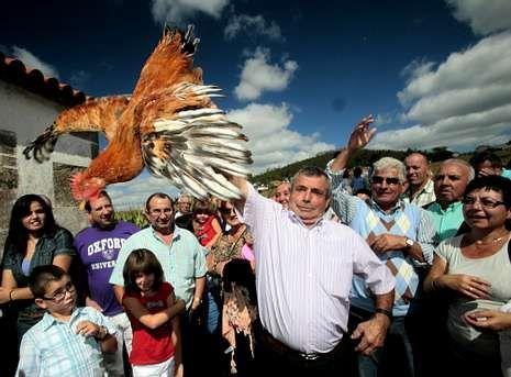 .En la romería de San Adrián de Verdes volverá a haber la tradicional subasta de gallos.
