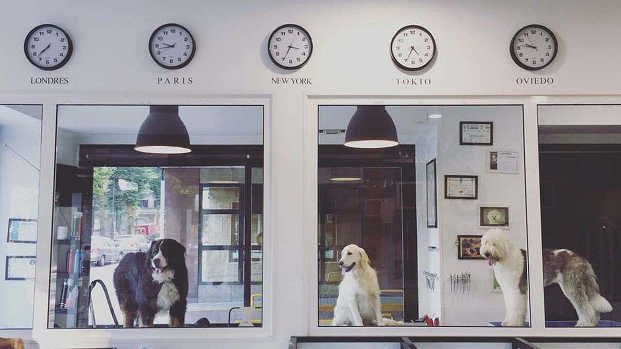 Diferentes razas de perros en el salón canino
