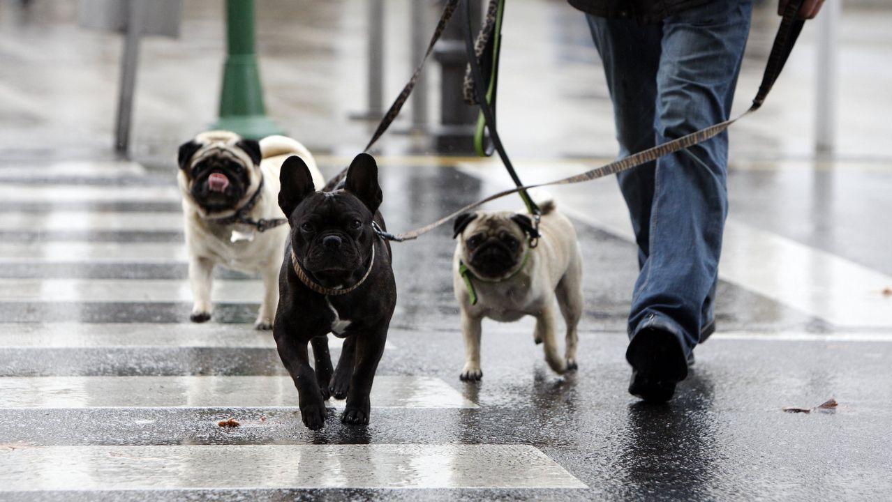 ¿Por qué las mascotas no pueden viajar como los humanos?