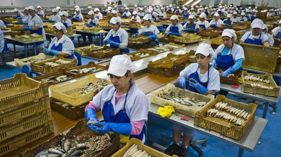 Un grupo de trabajadoras durante su jornada laboral en una fábrica de conservas de pescado