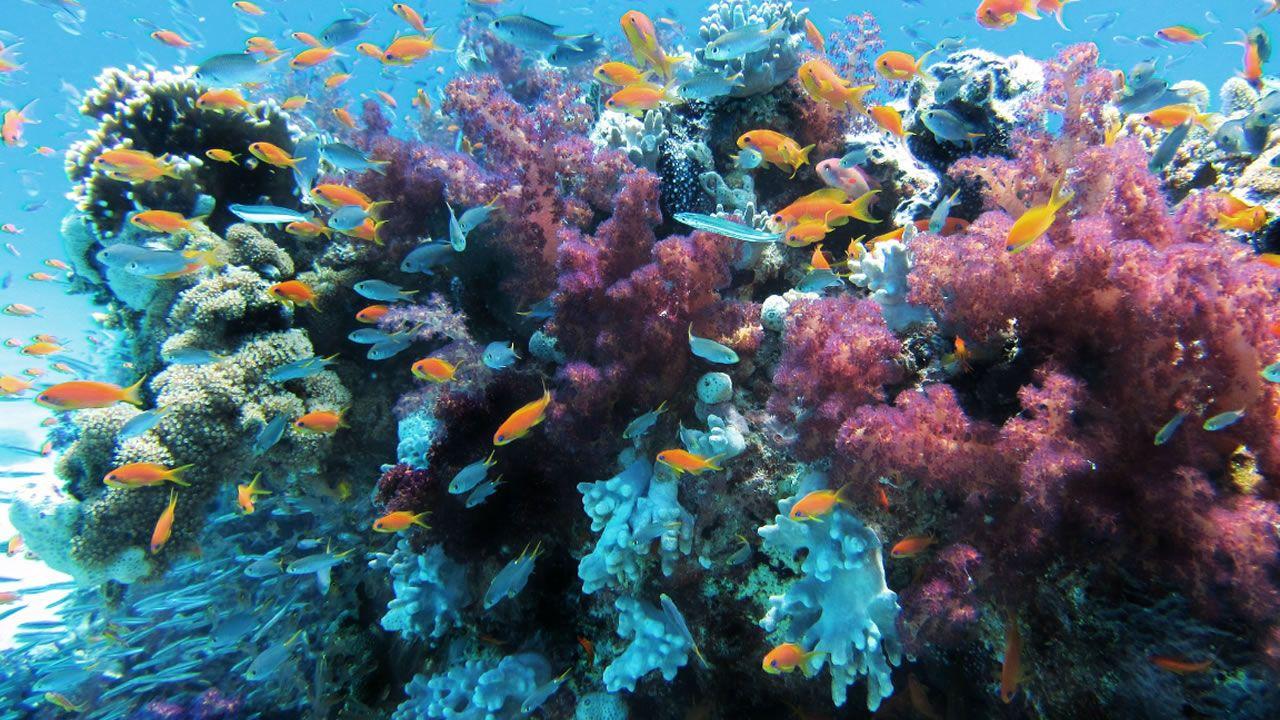.Laguna de Cospeito, reserva de la biosfera