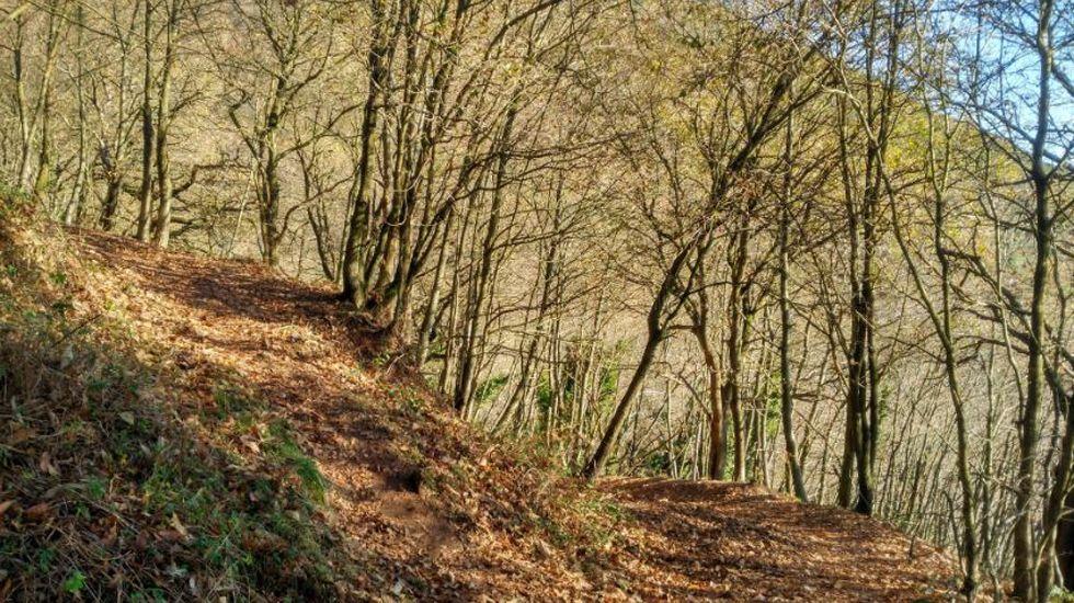 Uno de los numerosos caminos del monte