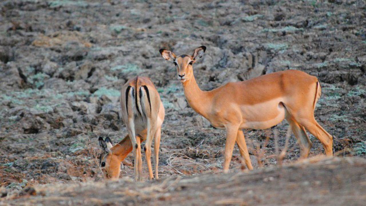 Parque Nacional de South Luangwa