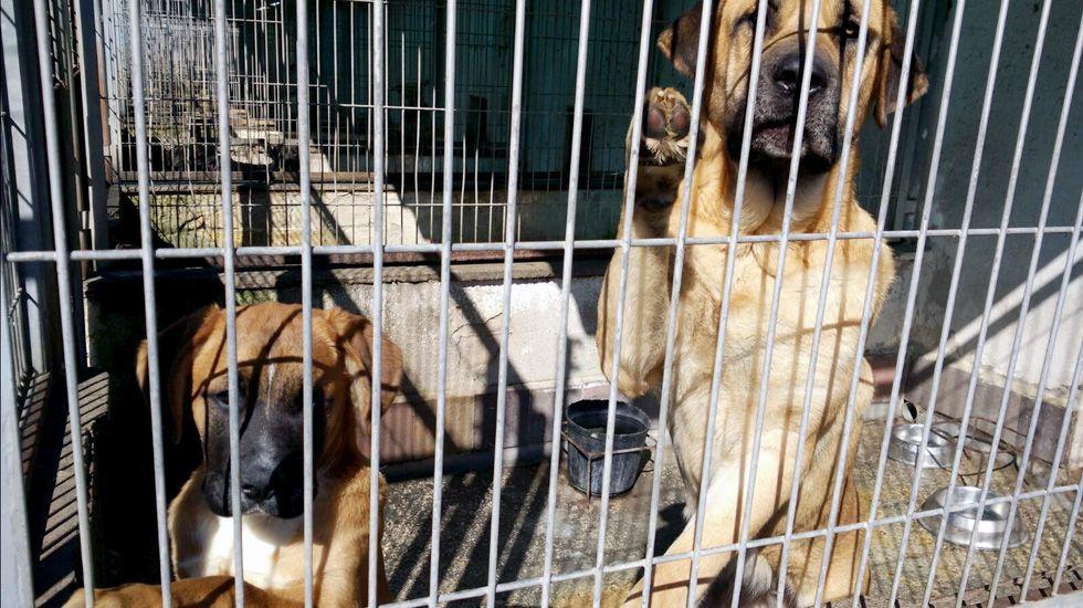 Dos perros en una de las jaulas del albergue de animales de Oviedo.Dos perros en una de las jaulas del albergue de animales de Oviedo