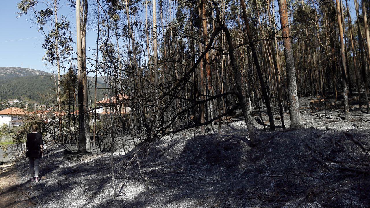 Imágenes del incendio iniciado en Dodro y que se extendió a Rianxo.Los acusados de provocar un incendio en Parres