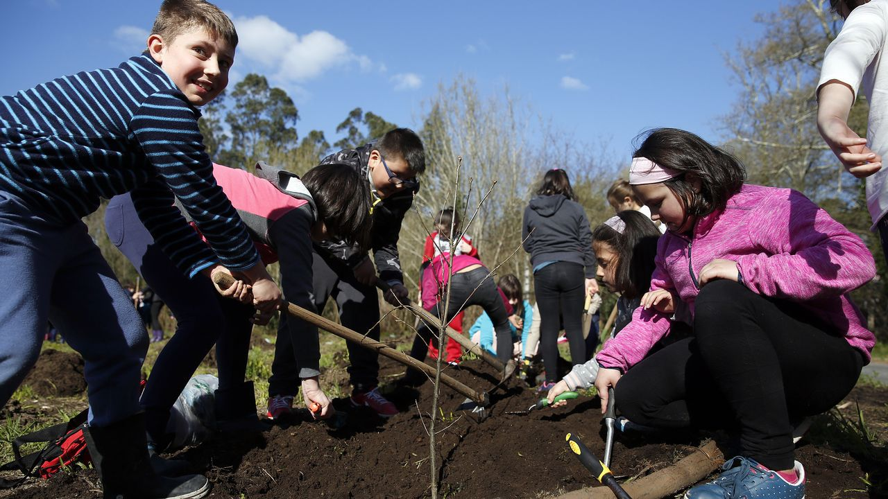 Mira aquí las imágenes de la plantación de árboles de los alumnos rianxeiros