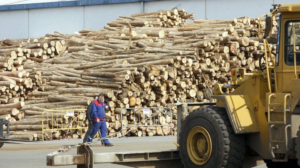 .Operaciones con madera de eucalipto en el muelle interior