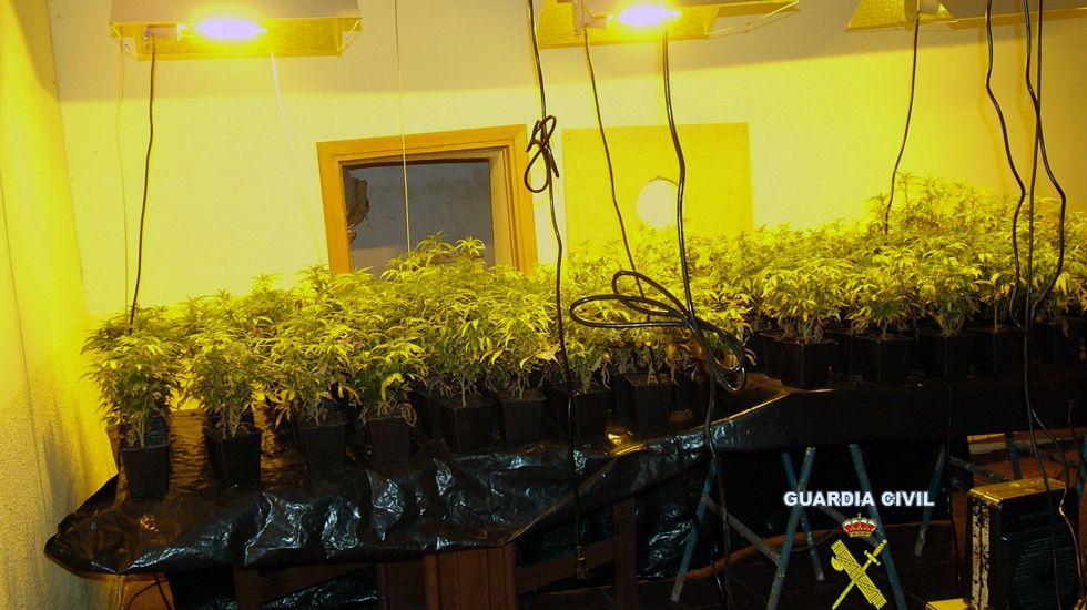 La plantación de marihuana del chalet de Gijón, con la iluminación, los humificadores y todo el montaje.La plantación de marihuana del chalet de Gijón, con la iluminación, los humificadores y todo el montaje