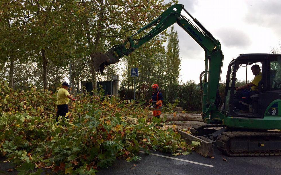 Los operarios, junto al árbol talado durante la mañana.