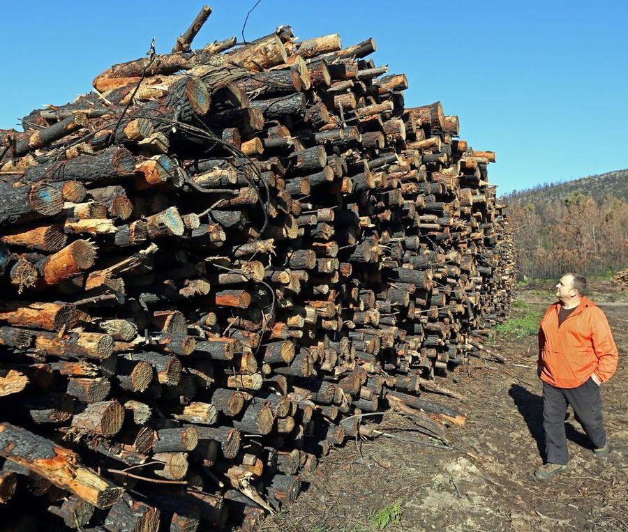 Galiza, incendios: La Xunta admite que en As Fragas do Eume han ardido 750 hectáreas.  - Página 3 BM24C3F1