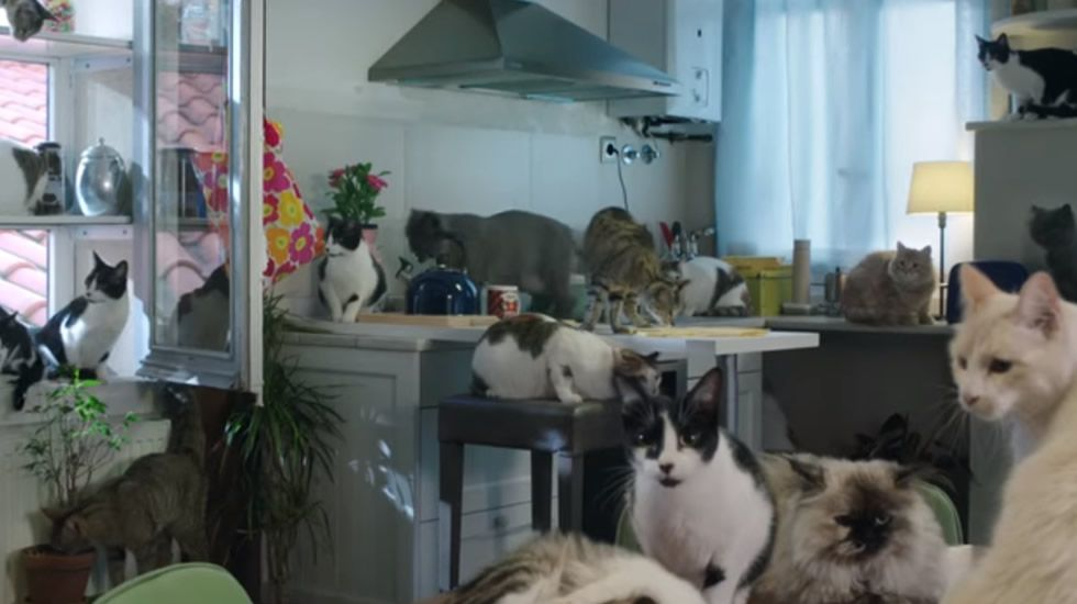 El PPse encomienda a los gatitos.