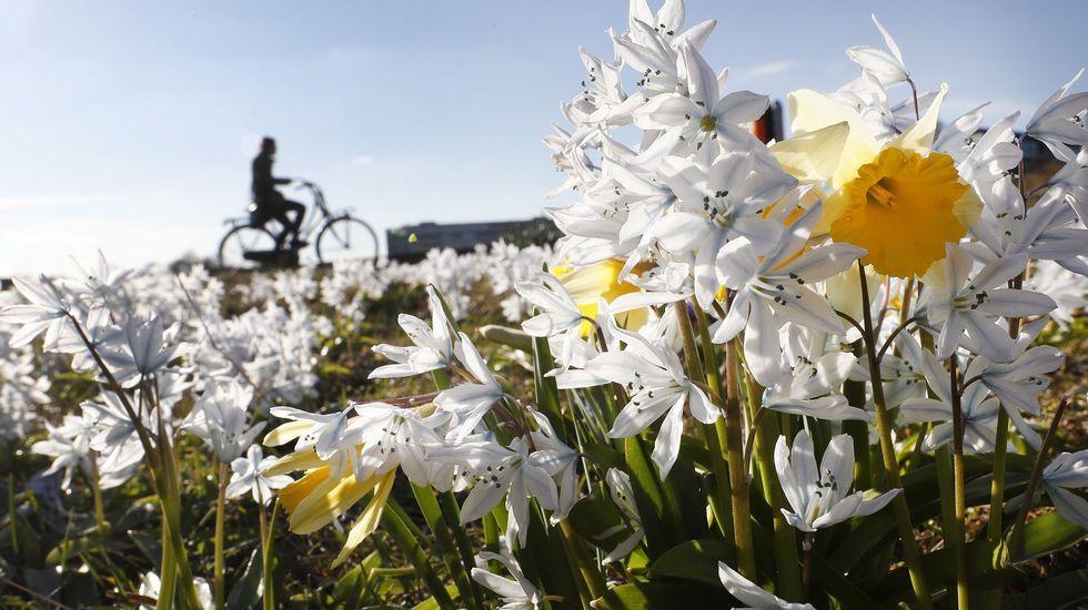 Una tromba de agua provoca pequeñas inundaciones en Vilagarcía.Varias flores comienzan a abrir sus pétalos durante la primavera