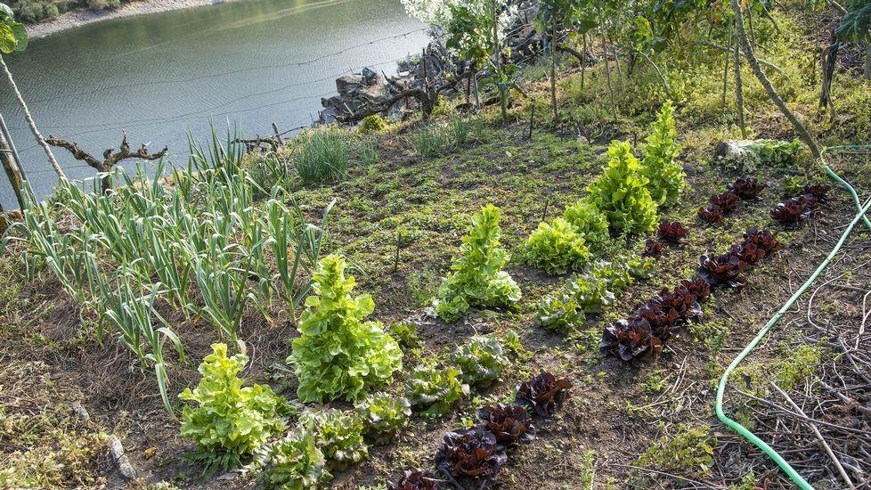 En el huerto se cultivan lechugas, cebollas y coles, y hay un parral para kiwi