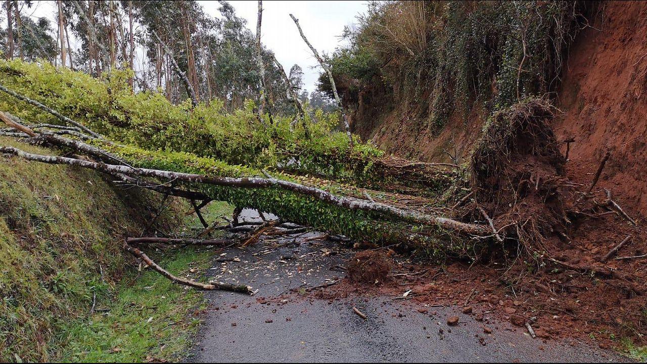 El viento que trae un temporal a Ferrol.Árbol retirado por el GES de Ortigueira
