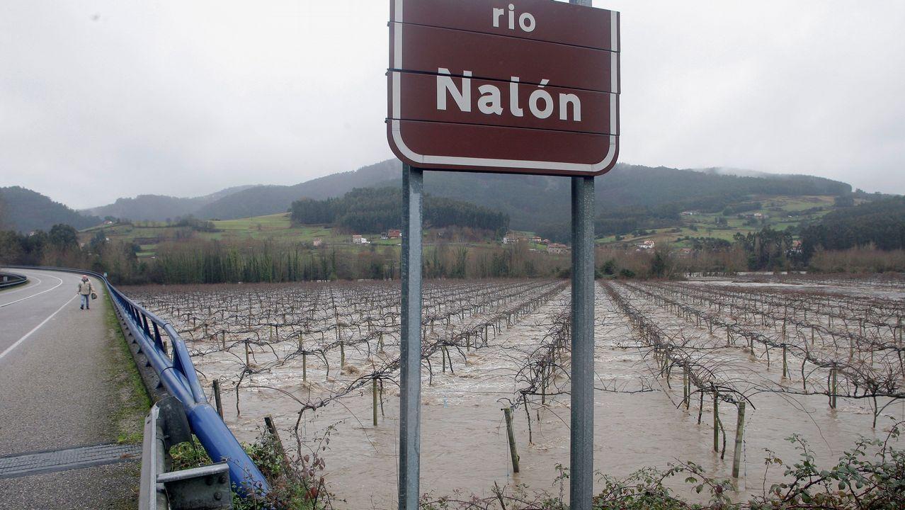 Estado que presenta una plantación de kiwis en el concejo de Pravia por el desbordamiento del río Nalón como consecuencia de las intensas lluvias caidas en las últimas horas