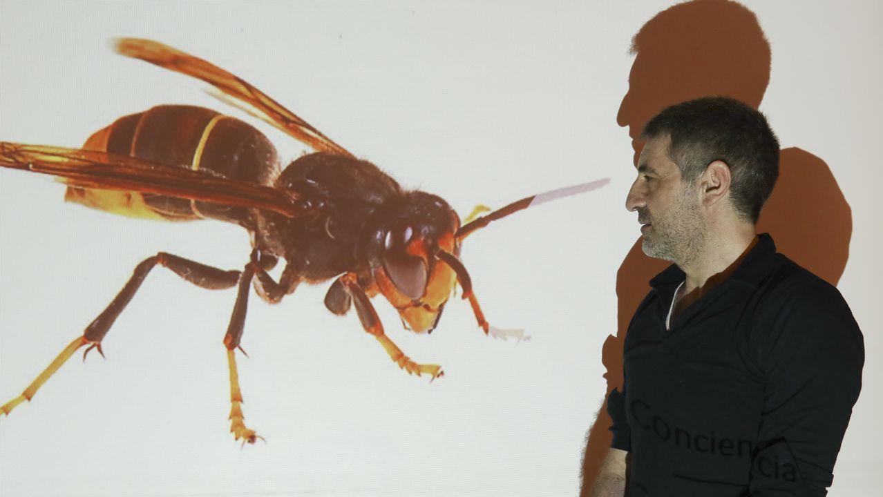 Concentración de apicultores gallegos.Nido de velutina en Ames